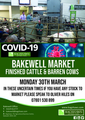barren-and-finished-cows-covid-19