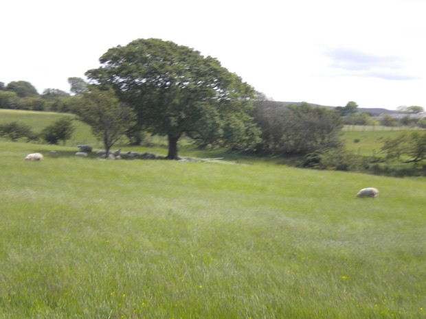 The Peak District Small Woodland Creation Scheme - Image 2