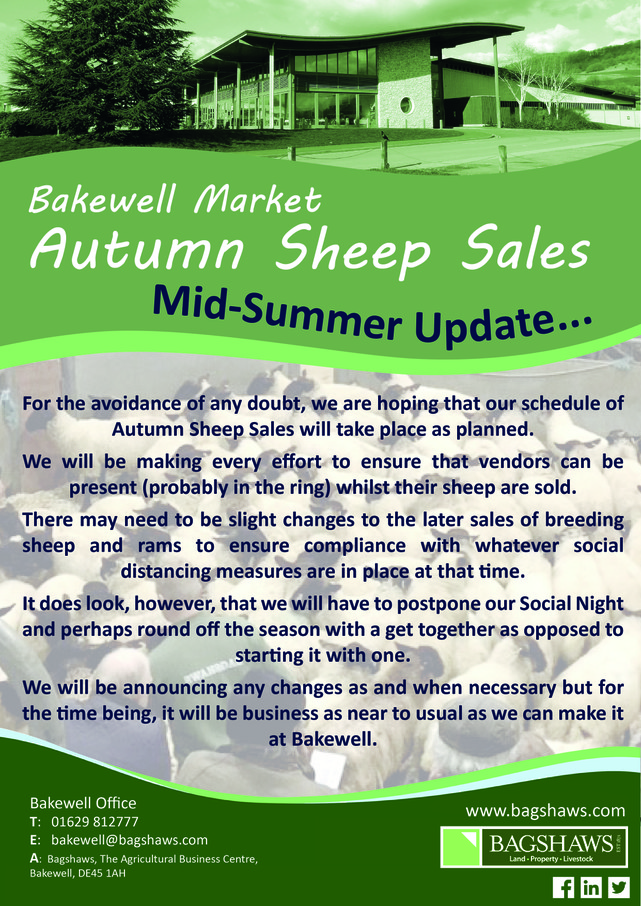store-sheep-sales-mid-summer-update-01