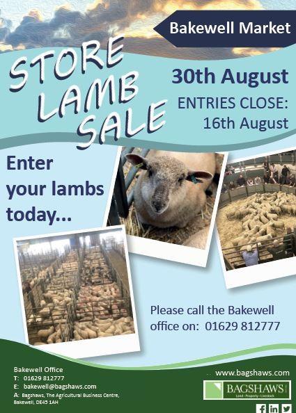 store-lambs-3008