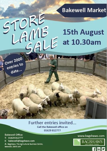 store-lambs-sale-1508