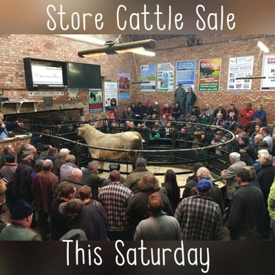 store-cattle-sale-pic-new