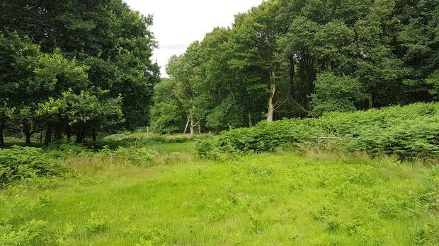 Land off Colliery Road, Startley Lane, Rugeley - Image 2