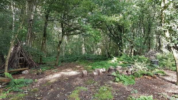 Brick Kiln Woodland, Hopton, Stafford - Image 6