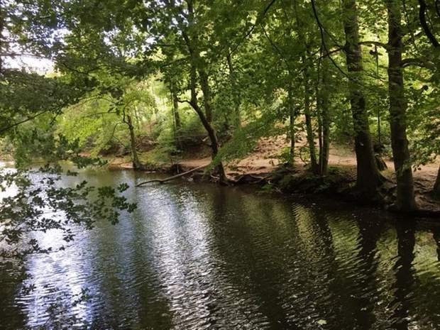 Woodland and Lakes at, Woodland and Lakes, Dimmingsdale, Alton - Image 1