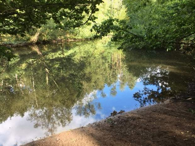 Woodland and Lakes at, Woodland and Lakes, Dimmingsdale, Alton - Image 4