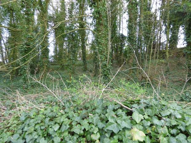 Character Woodland, Middleton-By-Youlgrave, Bakewell - Image 5