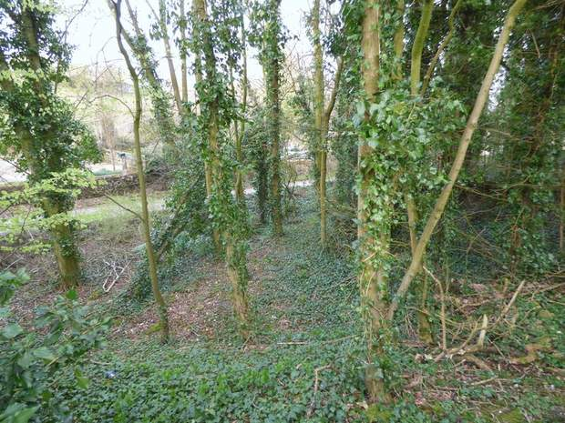 Character Woodland, Middleton-By-Youlgrave, Bakewell - Image 3