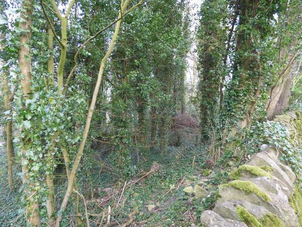 Character Woodland, Middleton-By-Youlgrave, Bakewell - Image 4