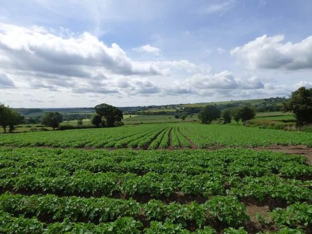 Lot 1: Barlow Lees Farm, Barlow Lees, Barlow, Dronfield - Image 7
