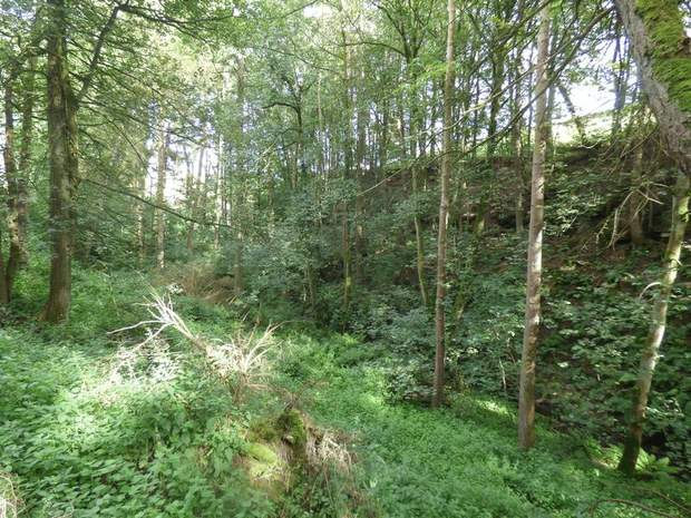 Woodland and Trout Ponds at Abney, Hathersage, Hope Valley - Image 5
