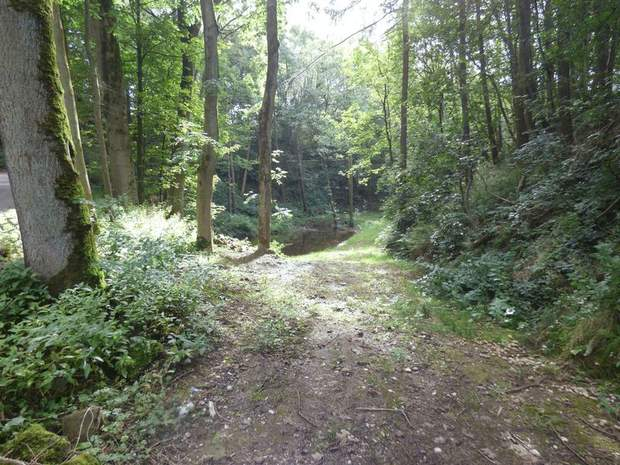 Woodland and Trout Ponds at Abney, Hathersage, Hope Valley - Image 4