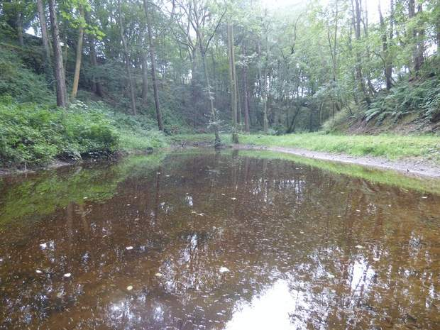 Woodland and Trout Ponds at Abney, Hathersage, Hope Valley - Image 1