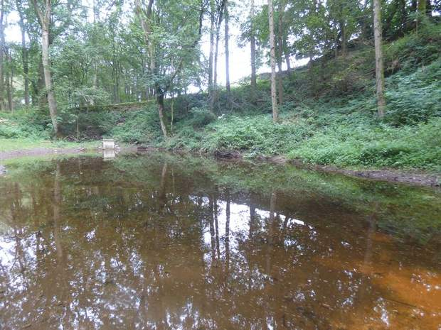 Woodland and Trout Ponds at Abney, Hathersage, Hope Valley - Image 3