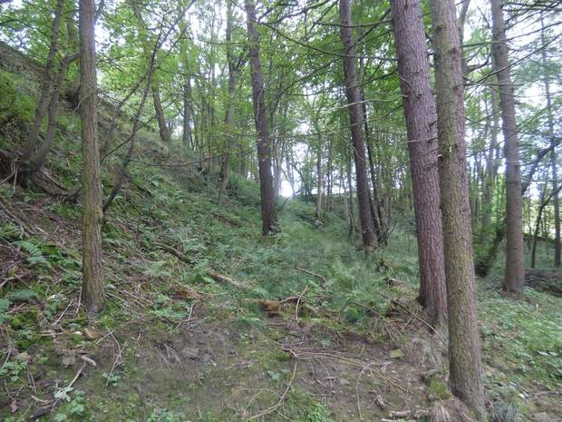 Woodland and Trout Ponds at Abney, Hathersage, Hope Valley - Image 2