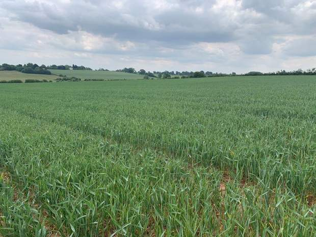 Land off Stafford Road, Lichfield - Image 1