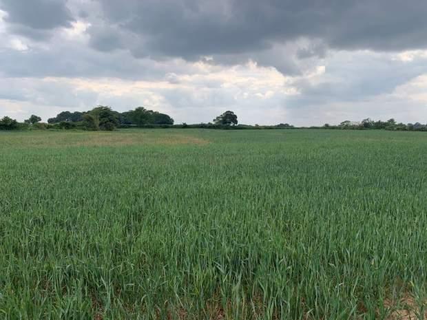 Land off Stafford Road, Lichfield - Image 6