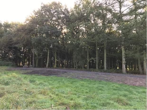 Brick Kiln Woodland, Hopton, Stafford - Image 12