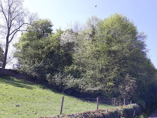 Character Woodland, Middleton-By-Youlgrave, Bakewell - Image 1