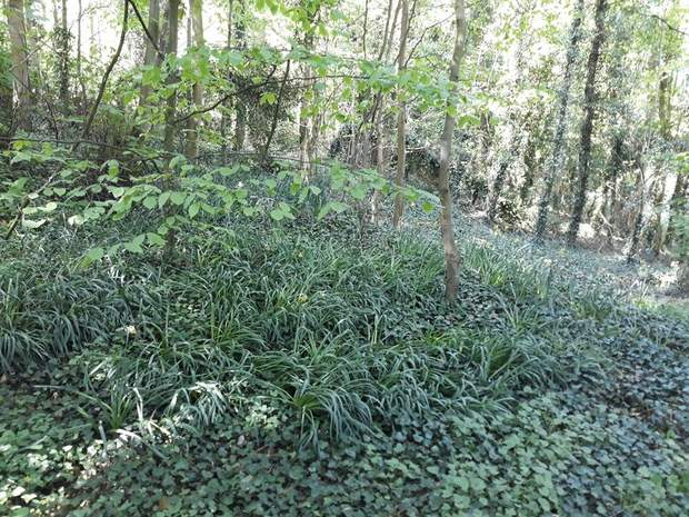 Character Woodland, Middleton-By-Youlgrave, Bakewell - Image 2